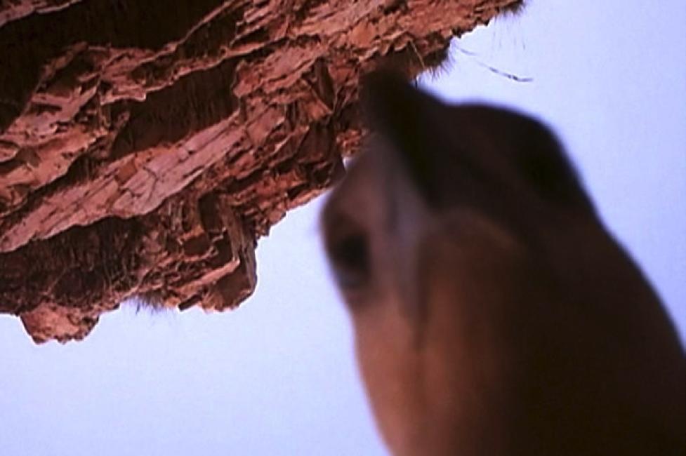 birdsie