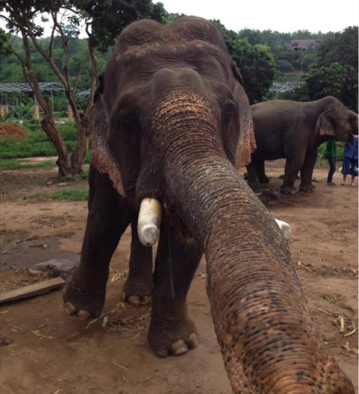 elephantsie