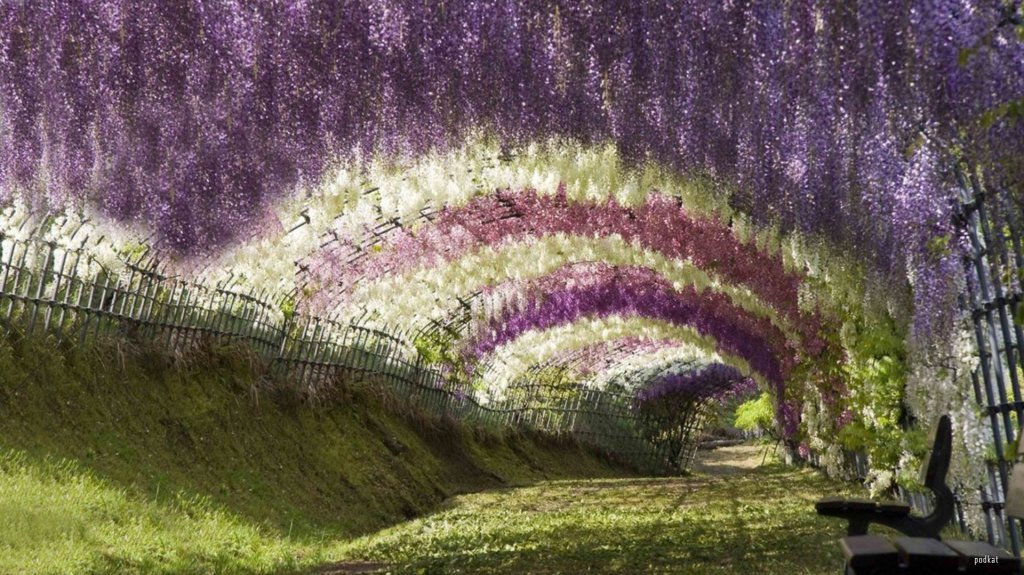 1. wisteria tunnel